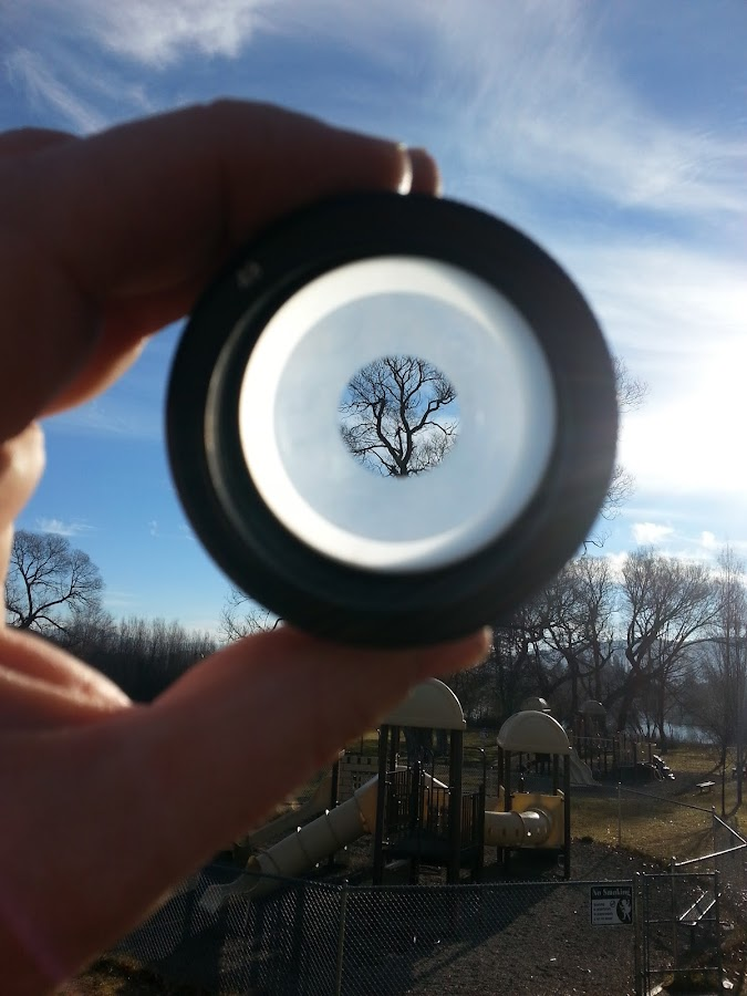 Tree in a spot lens by Scott Morgan - Artistic Objects Other Objects ( hand, tree, holding, glass, lens, frosted, spot,  )