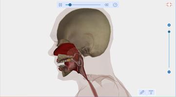 Screenshot of Human Anatomy Free
