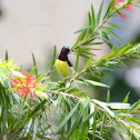 Purple Rumped Sunbird Male