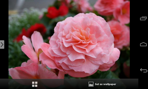 Beautiful Flowers Wallpapers screenshot 9