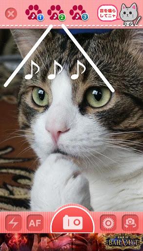 ねこ猫カメラ