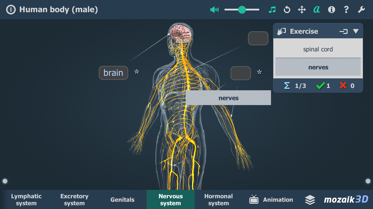 Human body (male) VR 3D- screenshot