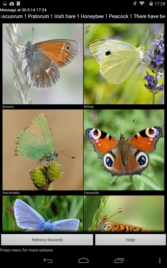 Identify Irish Butterflies- screenshot