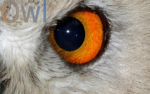 Animal Eyes- screenshot thumbnail