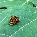 Green Grass-Dart Skipper Butterfly
