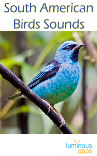 South American Birds Sounds