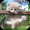 Dream Cat LiveWallpaper icon