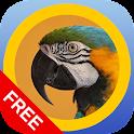 matchBIRDS Free