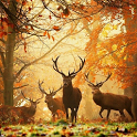 3D Forest HD Live Wallpaper icon