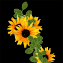 Fantasy Sunflower Live Wallpap logo