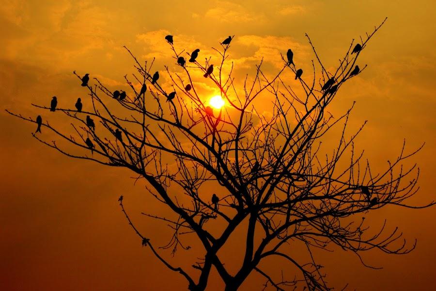 by Sayeed Hasan Akib - Landscapes Sunsets & Sunrises