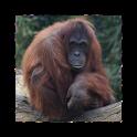 Dublin Zoo Visitor App logo