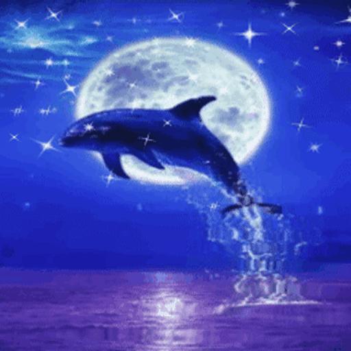 Картинка дельфин анимация, открытки