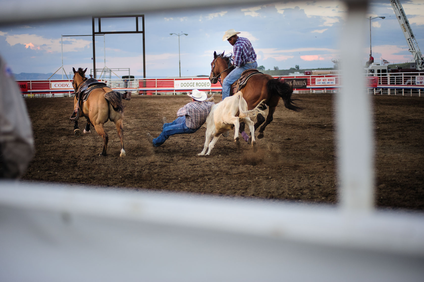 Bulldogging, Cody, Wyoming