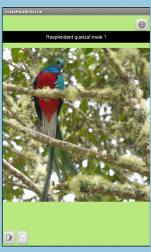 Costa Rica Birds Fieldguide