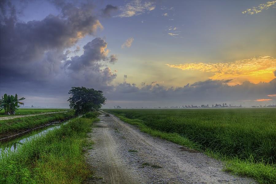 Morning by Ziz Abd Aziz - Landscapes Sunsets & Sunrises (  )