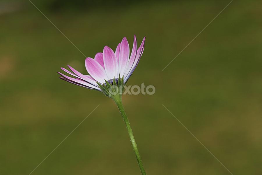 Flower by Hari Krishna Reddy - Flowers Single Flower