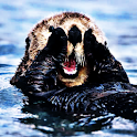 Sea Otter Sound Effects logo