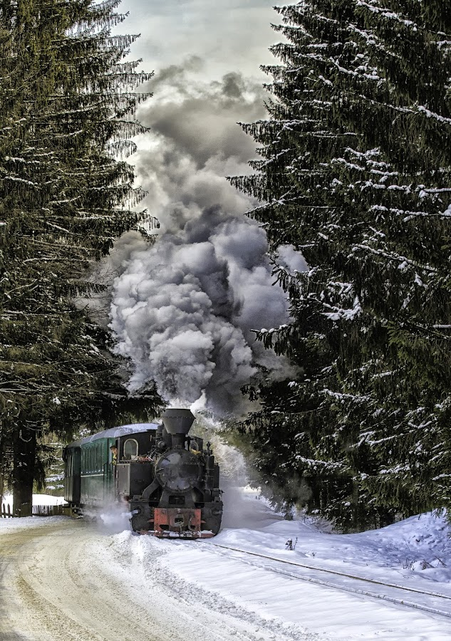 Between the trees by Pascal Hubert - Transportation Trains