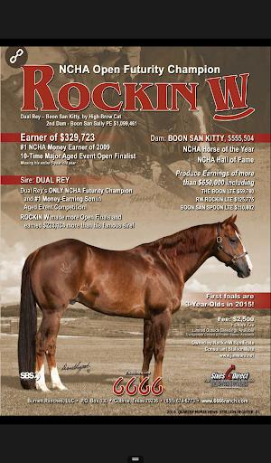 【免費新聞App】Quarter Horse Stallion-APP點子