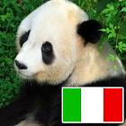 Animais no italiano icon