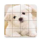 Puzzle - Cute Dogs