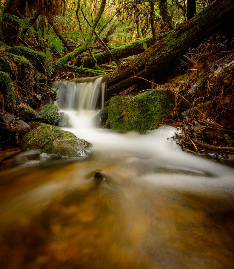 mini fall by Alan Wright - Landscapes Waterscapes