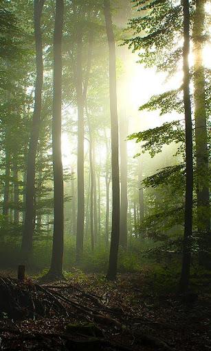 玩個人化App|林動態壁紙免費|APP試玩