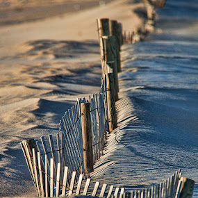 Fences make good neighbors by Deborah Felmey - Landscapes Beaches ( blowing, fence, beach, drift, shadows,  )