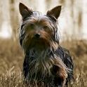 Dogs Live Wallpaper icon