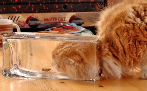 Najdi rozdíl : Kočky - náhled