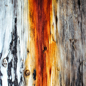 Human Stain by Cody Coker - Nature Up Close Trees & Bushes ( wood, tree, texture, ocean, pillar, beach, stain )