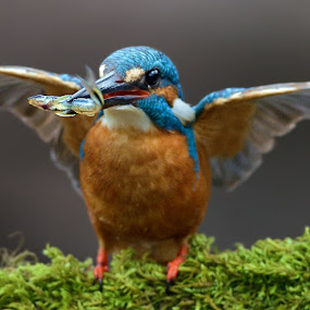 The Big Hunter by Raj Dhage - Animals Birds ( nikon )