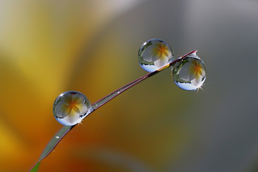 Dews by Dedy Haryanto - Nature Up Close Natural Waterdrops