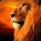 Lion Parallax LWP