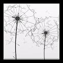 Dandelion Seeds Live Wallpaper