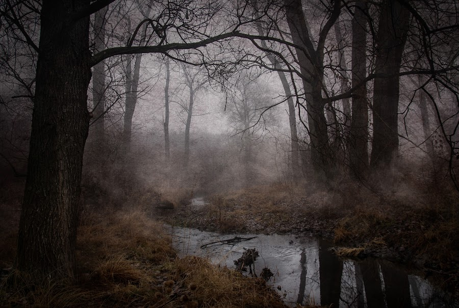 Fog on the river by Илияна Лазарова - Landscapes Forests ( misty trees, fog, fogy trees, fogy river, beautiful forest photos, fine art river landscapes, misty forest scene, river,  )