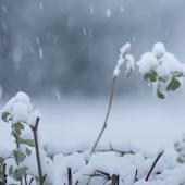 Realistic Snow Live Wallpaper