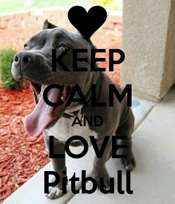 Pitbull Dogs - Android Apps on Google Play