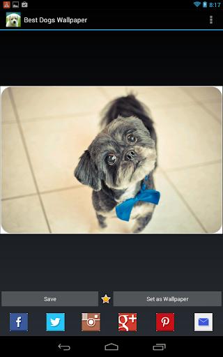 【免費個人化App】1 Million Best Dogs Wallpaper-APP點子