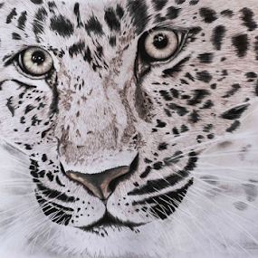 Glare by Paul Murray - Drawing All Drawing ( pencil, wildlife, realism, drawing, leopard )