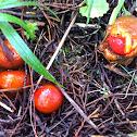 Hongo cherry