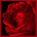 Infinite Love Live Wallpaper icon