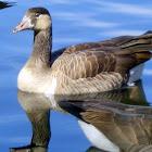 Goose Hybrid
