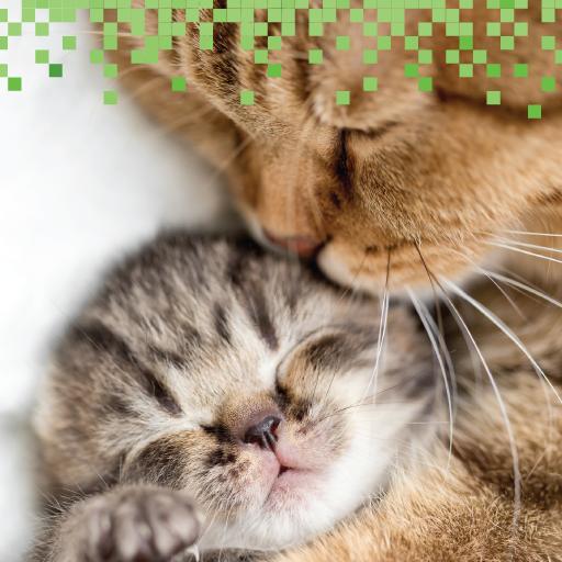 解謎必備App|Kitty Sounds Games LOGO-綠色工廠好玩App