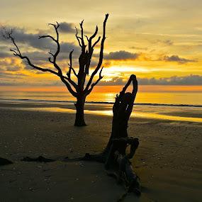 NATURE'S YOGA by Bethany Kenney - Uncategorized All Uncategorized ( tree, ocean )