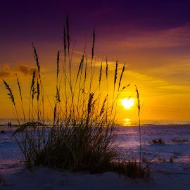 Siesta Silhouette by Scott Thomas - Nature Up Close Sand ( sand, silhouette, florida, sunset, beach, siesta key, purple, yellow, color )