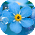 Forget-me-not Live Wallpaper icon