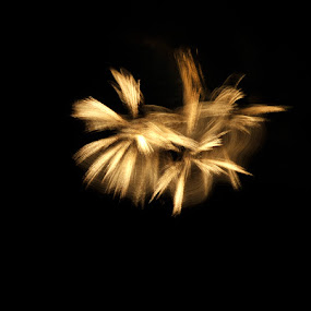 Golden whisps by Bill Morris - Abstract Fire & Fireworks ( abstract, 4th of july, fireworks, night, blur )