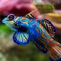 The Aquarium icon